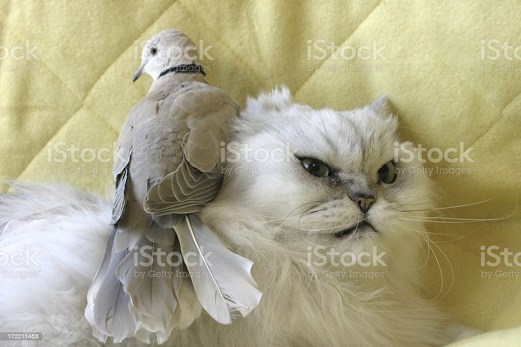 cats hate birds royalty-free stock photo