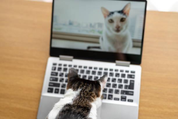 Cats having video call picture id1218196970?b=1&k=6&m=1218196970&s=612x612&w=0&h= 7cdtmiunszw9jzc1mwexkl 5txv0wj96ei4p1jukmg=