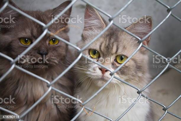 Cats in a cage picture id478280114?b=1&k=6&m=478280114&s=612x612&h=em4taxadg0pnay68um6zvl2b7lnazhb82k4bl5aabiq=