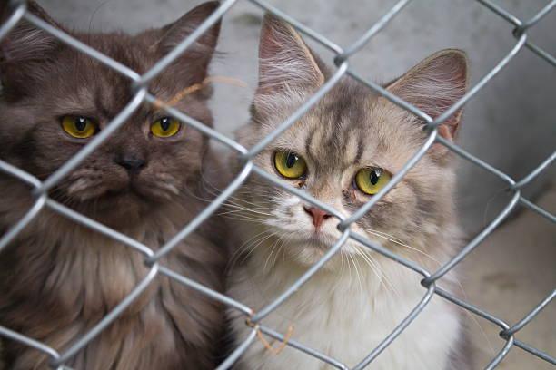 Cats in a cage picture id478280114?b=1&k=6&m=478280114&s=612x612&w=0&h=3six6xt1qp lnqj95tdwl0i4kvy8ktozldmkxbzswpk=
