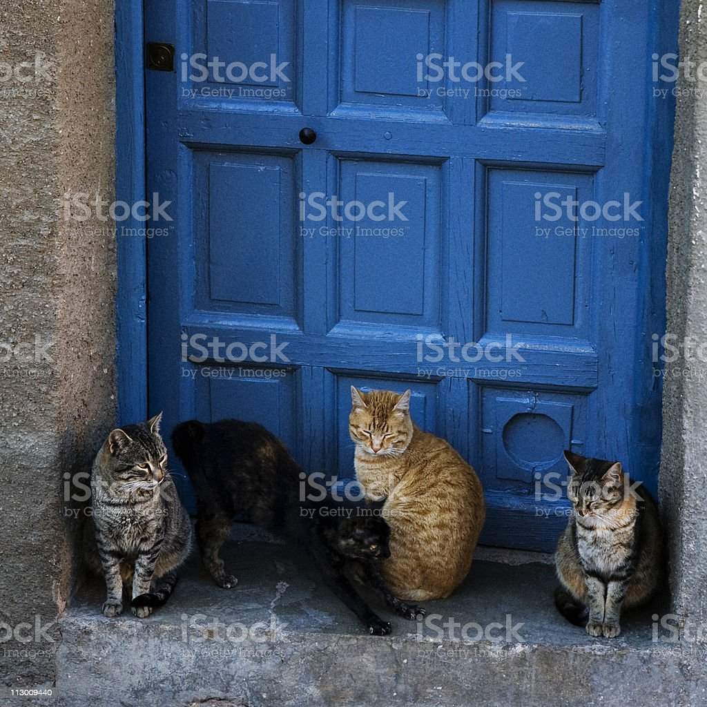 cats in front door royalty-free stock photo