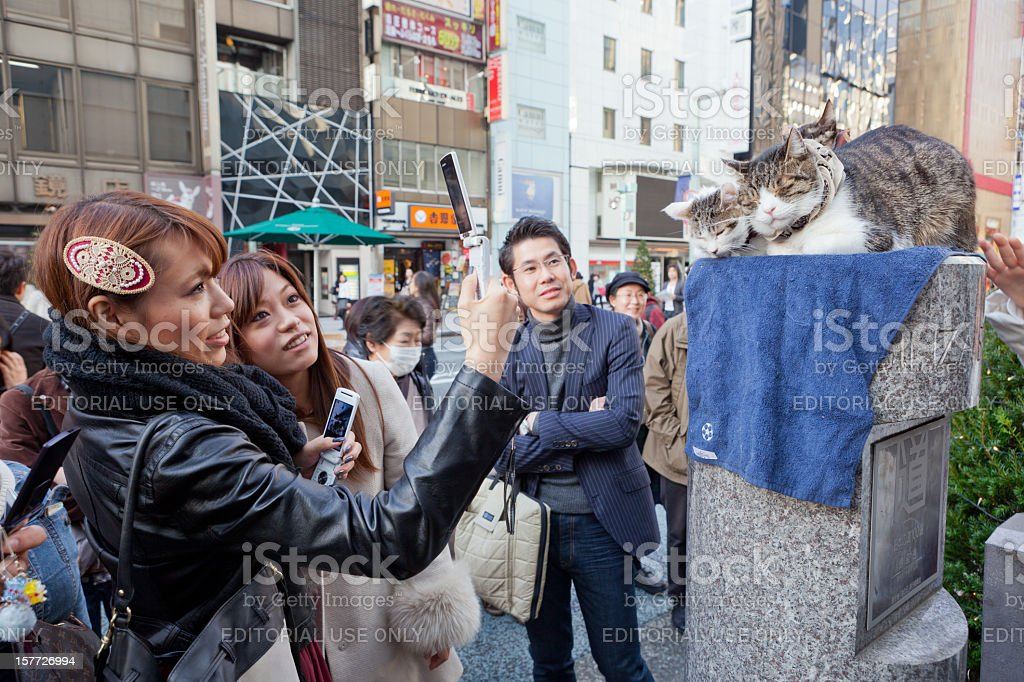 Cats in Ginza, Tokyo, Japan stock photo