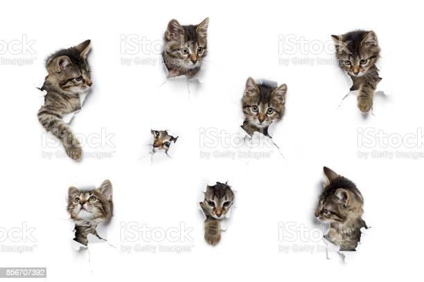 Cats in holes of paper picture id856707392?b=1&k=6&m=856707392&s=612x612&h=x2clwtlt6qyvutdifpkrlcblw1rleuqn9 5li29is0e=