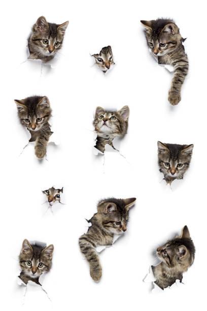 Cats in holes of paper picture id933169710?b=1&k=6&m=933169710&s=612x612&w=0&h=lwgod4pfjoqsdwa rovk9eujjrsfroril1cyizzlpem=
