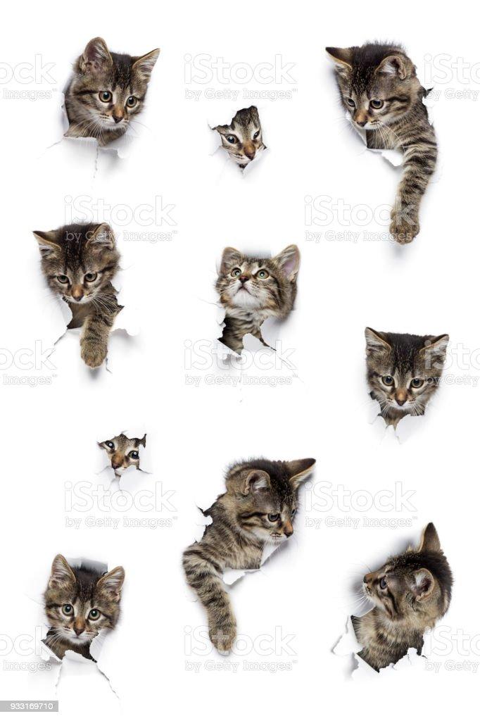 Katzen in Löchern von Papier – Foto