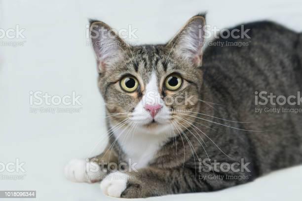 Cats in thailand picture id1018096344?b=1&k=6&m=1018096344&s=612x612&h=2eqeznsqelb obpgtt7tnkhiil918ewimhfwzpfpqyw=
