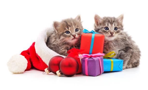 Cats in the hat santa with christmas gifts picture id1178136747?b=1&k=6&m=1178136747&s=612x612&w=0&h=g9sazhuhlpj16filoepml1u3sqgjqhd 1fwb8annhq4=