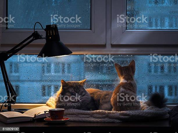 Cats in the window picture id510329132?b=1&k=6&m=510329132&s=612x612&h=n atq1uj5illrcnufimwhlfsuwjueensp umlntp1cs=