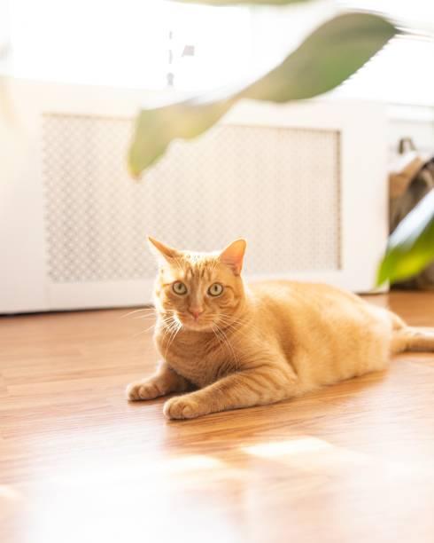 Cats life at home picture id1159240295?b=1&k=6&m=1159240295&s=612x612&w=0&h=2bviqhus0fziqhdgs6rkzco7j1pzfrpxqozc8cfjgg8=