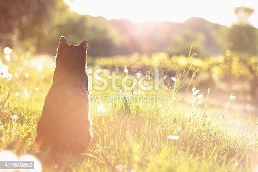 istock Cat's life 477649852