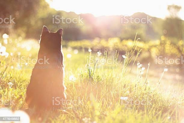 Cats life picture id477649852?b=1&k=6&m=477649852&s=612x612&h=4wjtcdureqxxz8d4yhizdvmtc0t7tbyfiokibxwrvko=