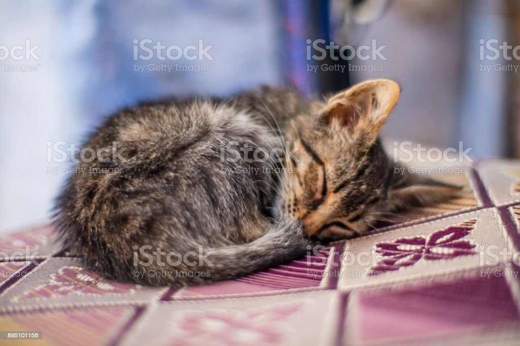 Cats living in Chefchaouen stock photo