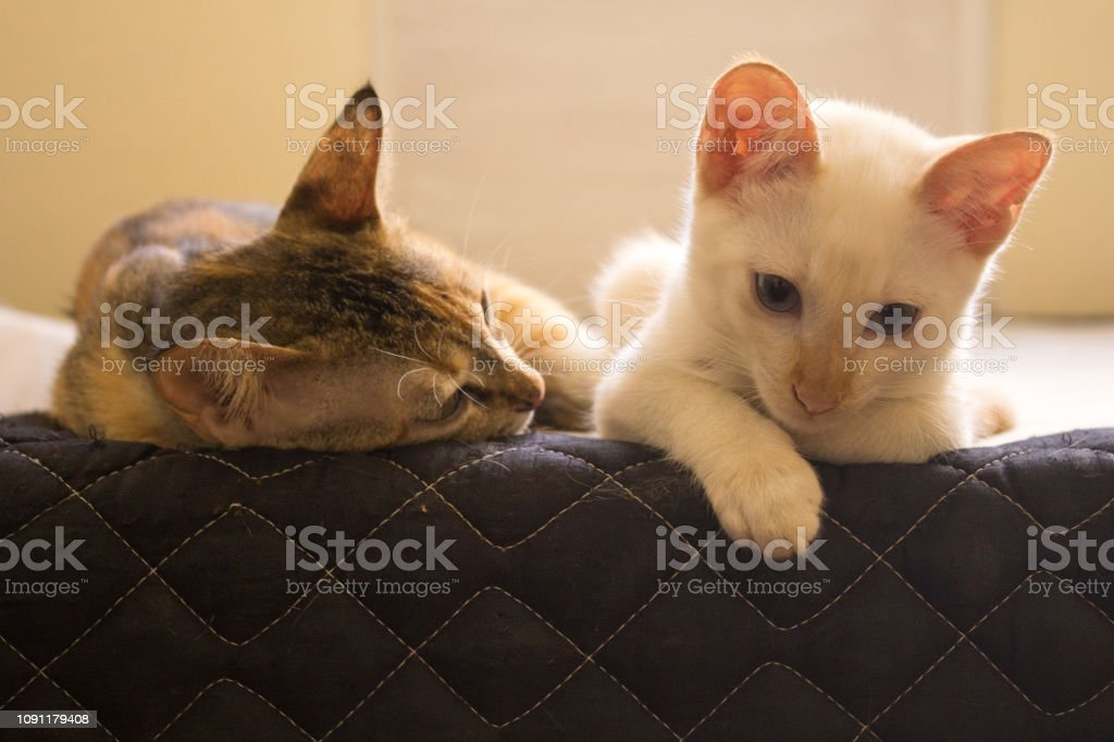 Cats looks over a wall. Cute cats looking down, macro. Cute domestic...
