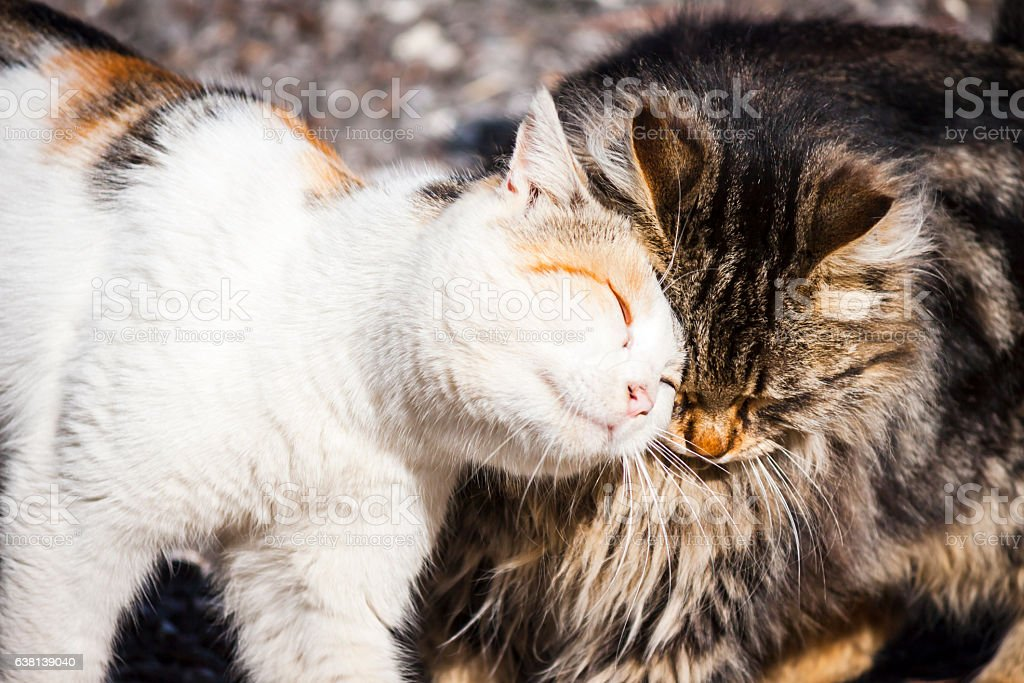 Cats meeting friendly stock photo