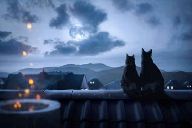 Cats on a rooftop watching the full moon picture id998453928?b=1&k=6&m=998453928&s=612x612&w=0&h=37eufqey77fj4dl54ft3sdow8r im5l0h8tpdfskszq=