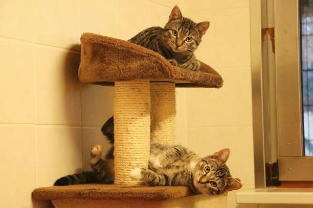Katzen auf einem Kratzpfosten – Foto