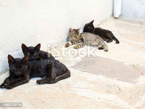 Cats on street in Bodrum