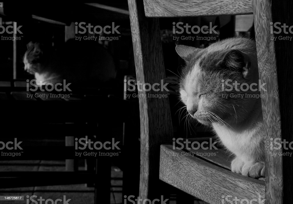Cats On The Chairs stock photo