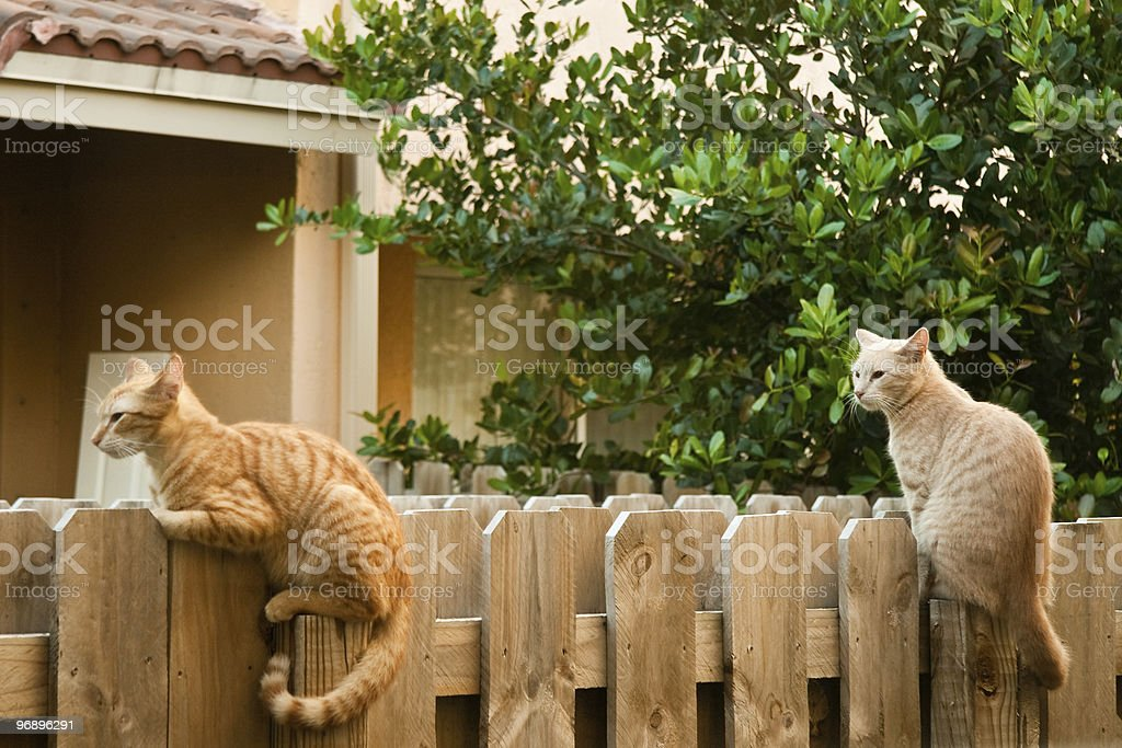 Cats on the fence royalty-free stock photo