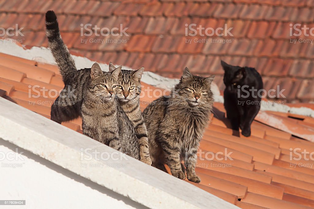 cats on the roof stock photo