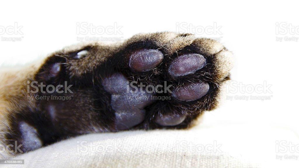 Cats paw stock photo
