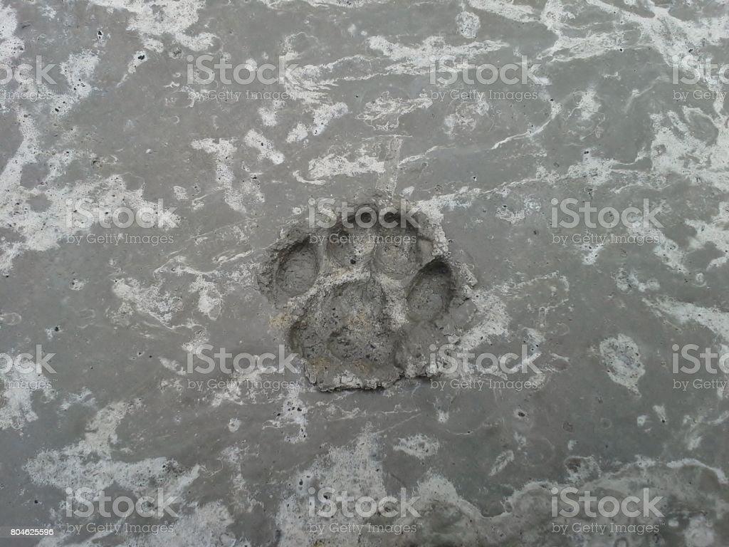 Cat's Pawprint in Concrete stock photo