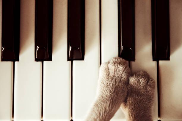 Cats paws lying on the piano keys close up cat playing picture id992386436?b=1&k=6&m=992386436&s=612x612&w=0&h=vim3aucyw csdmj4tmhctyktha9efpeb7otuaxtlo5q=