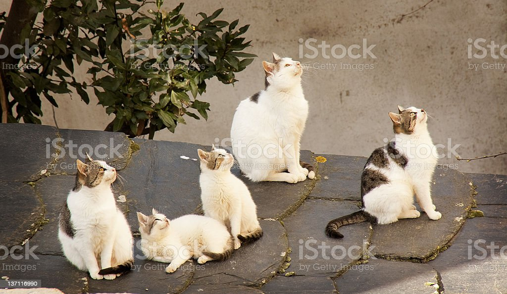 cats paying attention stock photo