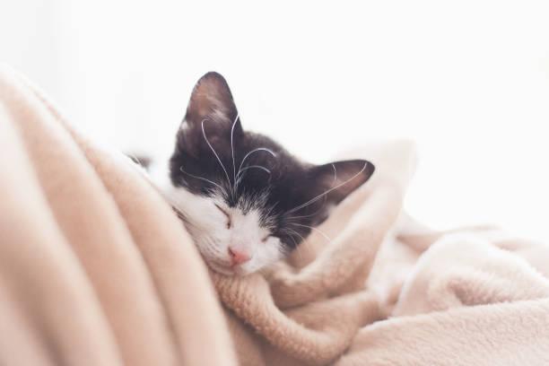 katten - sleeping illustration stockfoto's en -beelden