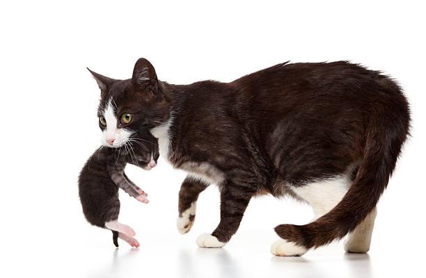 Cats picture id184377691?b=1&k=6&m=184377691&s=612x612&w=0&h=pnevkblqmydrnxpsekwt1xvbpetbvlptvtxyrv9xcxs=