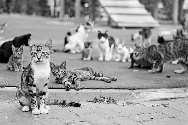 cats - large group of objects stock photos and pictures