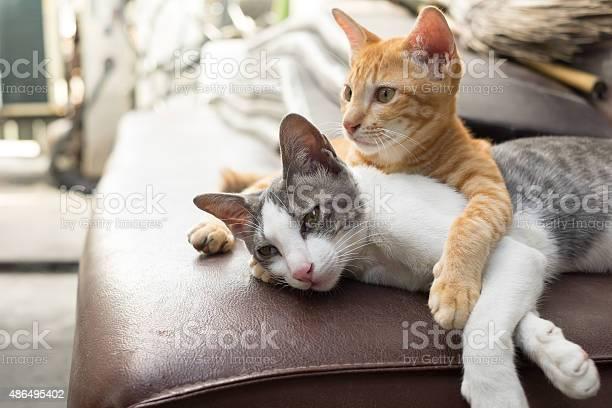 Cats picture id486495402?b=1&k=6&m=486495402&s=612x612&h=mii7pl3qnt1ugbgruxlt7b01k cawhr17gzrchwaivs=