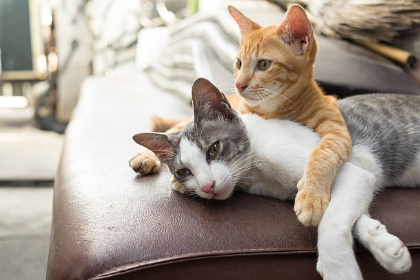 Cats picture id486495402?b=1&k=6&m=486495402&s=612x612&w=0&h=com0jipsxgml6dppdw dmtu2hq3hgepklhqv6obdxuk=