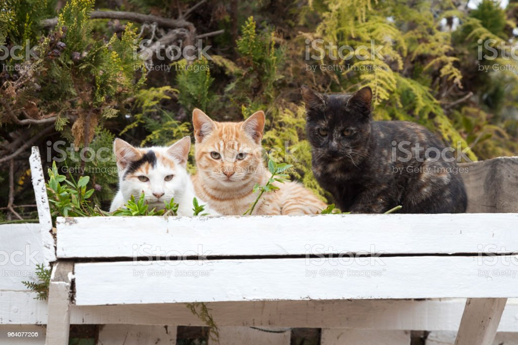 cats - Royalty-free Animal Stock Photo