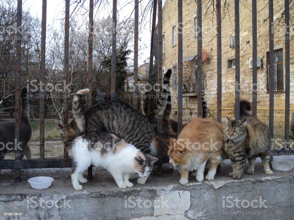 Katzen - Lizenzfrei Fotografie Stock-Foto