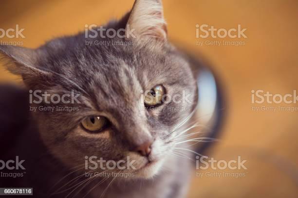 Cats portrait picture id660678116?b=1&k=6&m=660678116&s=612x612&h=cwc2z0nwsyyotlzfdyaekhrclwfipa31b 1abe1frig=