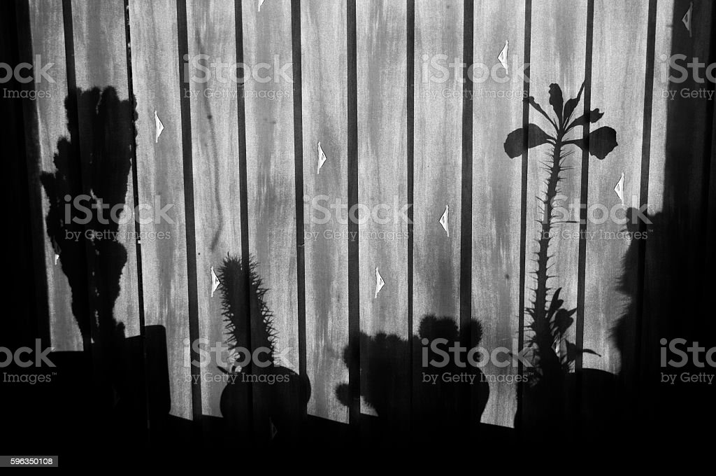 Cat's shadow hidden among cactus shadows royalty-free stock photo