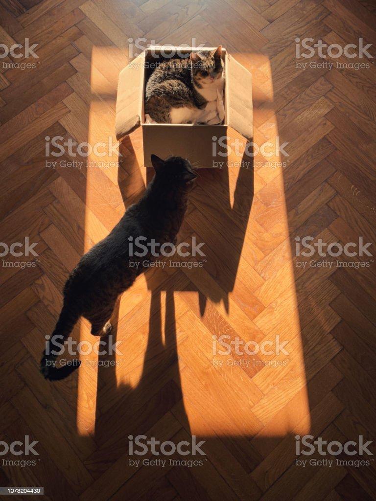 Cat's shadows. stock photo