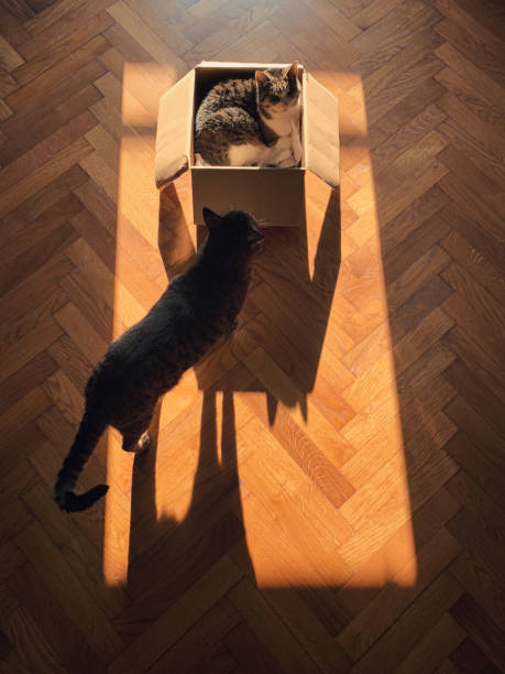 Cat's shadows. Two cats interested for lying in the box. Focus on shadow. taken on mobile device stock pictures, royalty-free photos & images