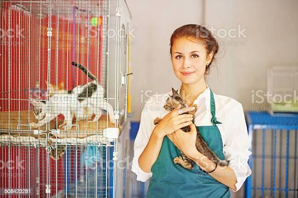 Cats shelter picture id508423281?b=1&k=6&m=508423281&s=612x612&h=ochpb dti15lfweumjmmr2r3f4f15zuakgdunfdam o=