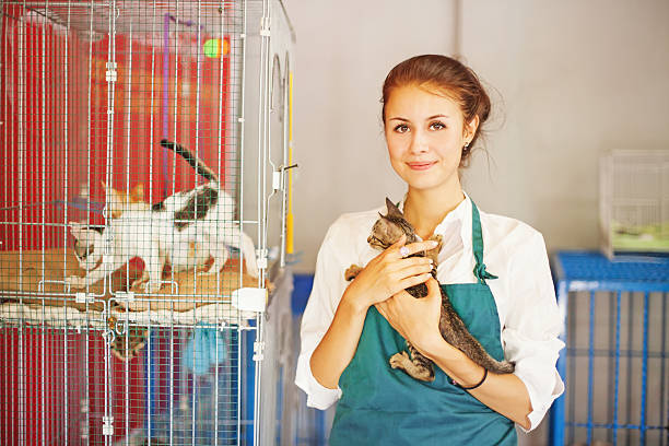 Cats shelter woman working in cats shelter sheltering stock pictures, royalty-free photos & images