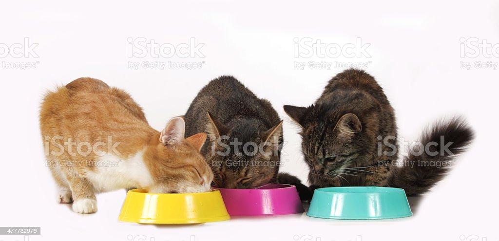 cats sitting at food bowl stock photo