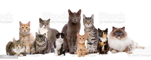 Cats sitting in a row picture id1058510144?b=1&k=6&m=1058510144&s=612x612&h=5ziqotrqx allcgbcxjmmlqqr mxmehumkzmm7bqzjw=