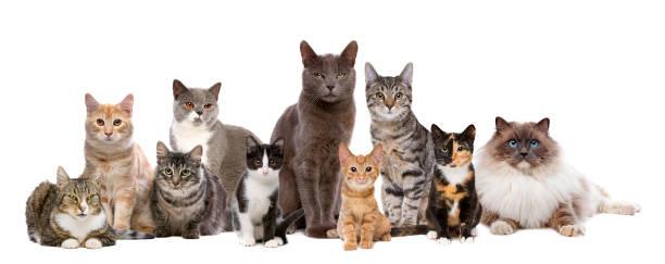 Cats sitting in a row picture id1058510144?b=1&k=6&m=1058510144&s=612x612&w=0&h=6cmwjypguzbpylejsgnf3gxxeii0rqylpx42gx5ht1o=
