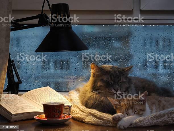 Cats sleeping in the window picture id510313552?b=1&k=6&m=510313552&s=612x612&h=wvysvzbavbxayebtzvdaweicqqtglay19 cymekgtuq=