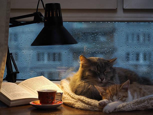 Cats sleeping in the window picture id510313552?b=1&k=6&m=510313552&s=612x612&w=0&h=ifvs2lckxfpckxhlt xpufkpnabytjorbbeitnmcdri=