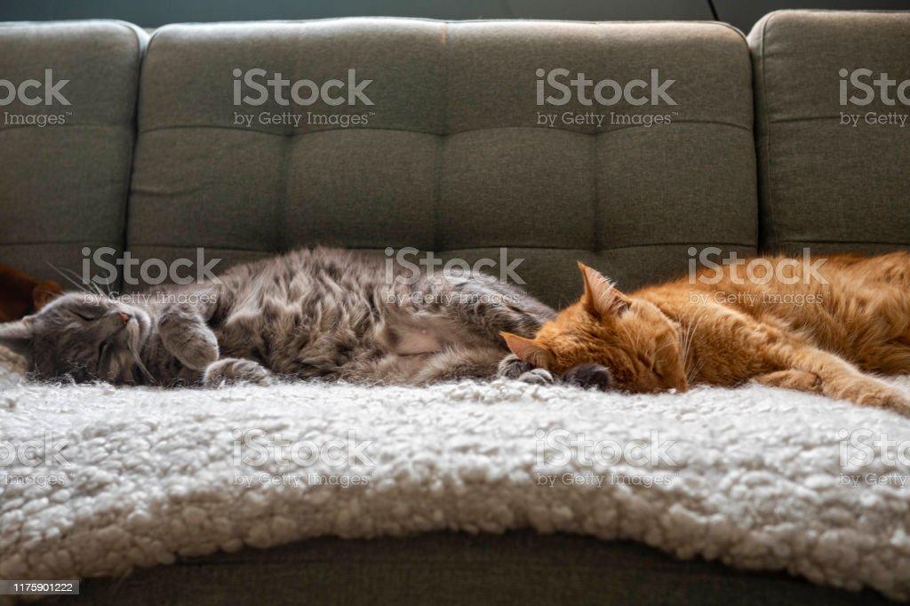 katter sover på soffan - Royaltyfri Avkoppling Bildbanksbilder