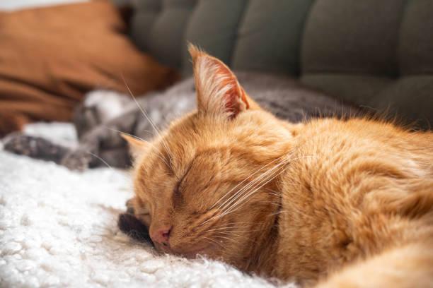 katter sover på soffan bildbanksfoto