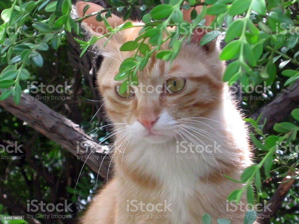 cats - storyteller 08 stock photo