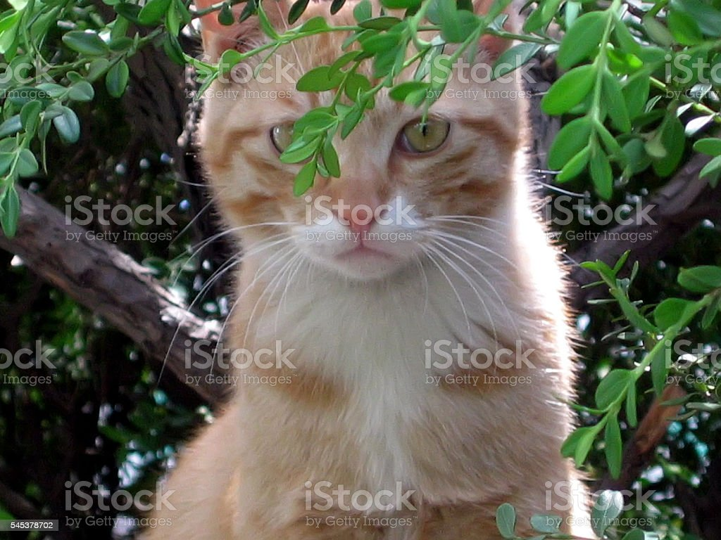 cats - storyteller 09 stock photo